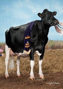Roodfactor Gold Chip uit Licorice EX-95