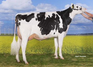 Holec Redrose Braxy 2 RC 2y VG-88