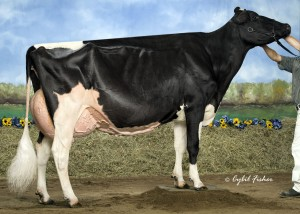 Rainyridge Talent Barbara RC EX-95