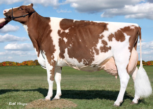 Lavender Ruby Redrose Red EX-96