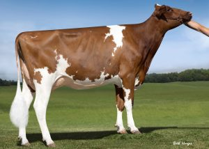 KHW Alchemy Adeline Red 2y VG-85