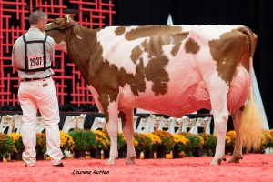 Luck E Advent Kandie Red EX-95