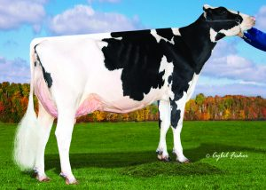 Kings Ransom MG Cleavage EX-95