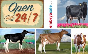 The best cow families on your fingertips