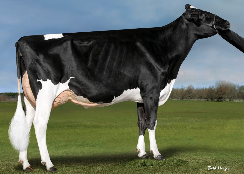 Endco Diamond Beauty RC EX-90