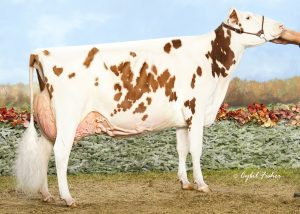 Miss Pottsdale Defiant Red EX-94