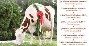 Opvallendste Red-Holsteins