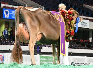 The Jersey: South Mountain Voltage Radiant EX-93