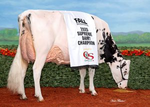 FEMbryos out the daughter of Erbacres Snapple Shakira EX-95 …