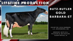 Nominated Lifetime Production Cow 2020
