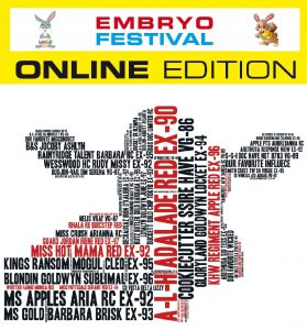 Embryo Festival: Easter Egg Online Edition