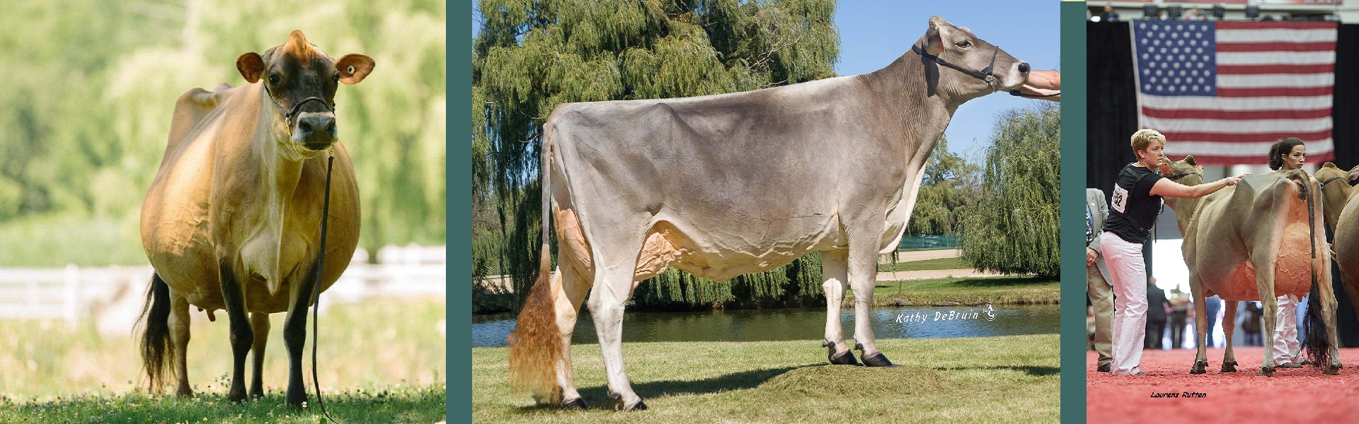 Brown Swiss Jersey