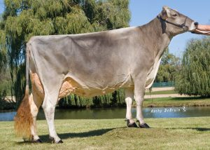The best Brown Swiss FEMbryos