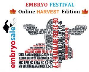 "Embryo Festival ""Harvest Edition"""