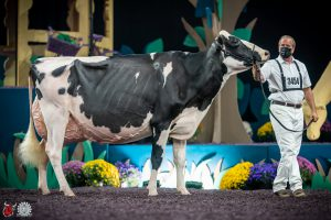 FEMbryos out the family of Oakfield Solomon Footloose