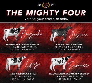 Holstein Canada 2020 Cow of the Year